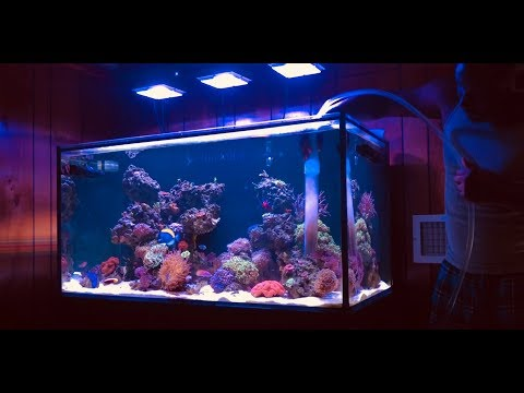 SCA 120 Gallon Reef  Ep33  Import & Export  Finding Balance