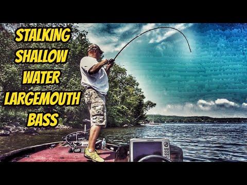 Stalking Shallow Water Largemouth Bass