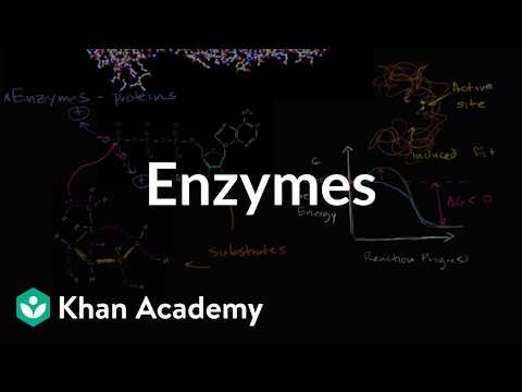 a research on enzymes and how they work Enzyme laundry detergent & stain removers  what are enzymes and how do they work i bet you've heard about various cleaning and laundry supplies which contain.