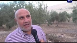 أهمية الغطاء النباتي - محافظة الكرك