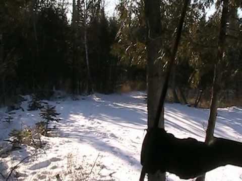 Hunting Russian Boar In Upper Michigan