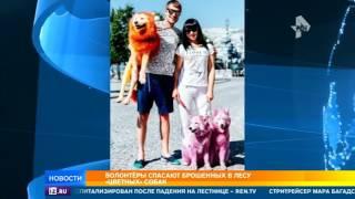 На юге России развернулась целая спецоперация по спасению собак, брошенных на произвол судьбы
