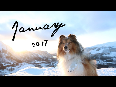 Hiking in Norway │Luca the Sheltie