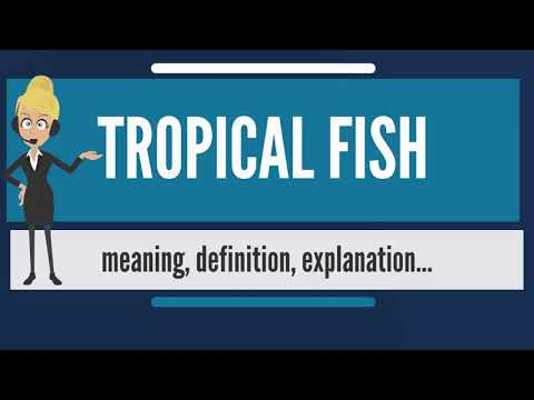 What Is TROPICAL FISH? What Does TROPICAL FISH Mean? TROPICAL FISH Meaning & Explanation