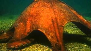 разнообразие животных моллюски