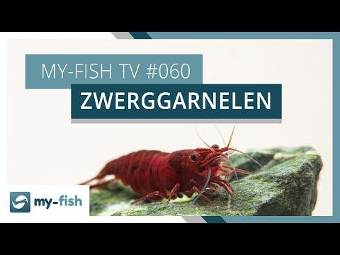 Zwerggarnelen richtig im Aquarium halten | my-fish TV #060