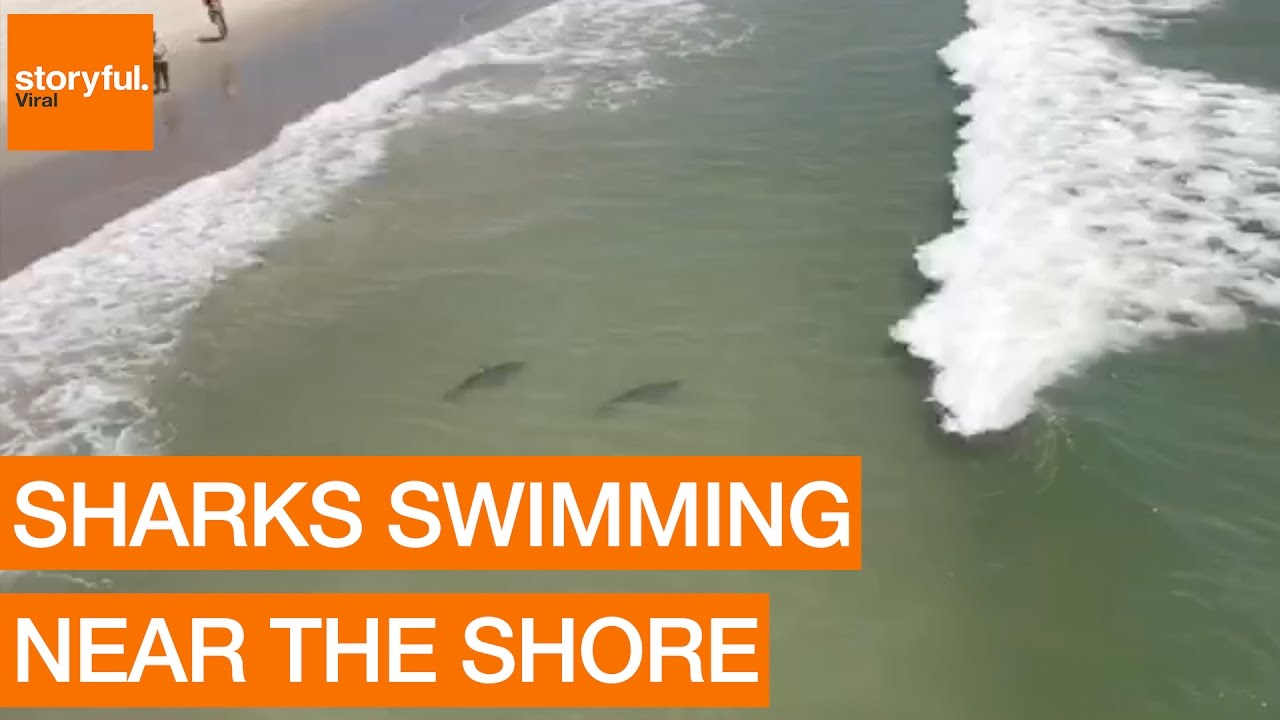 Multiple Sharks Swim Close to Myrtle Beach Shore (Storyful, Crazy)
