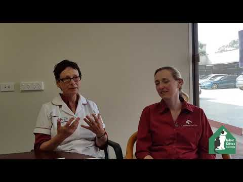 Indoor Kitties Australia - interview with Dr Kate King and Dr Georgia Knudsen from Canberra Cat Vet