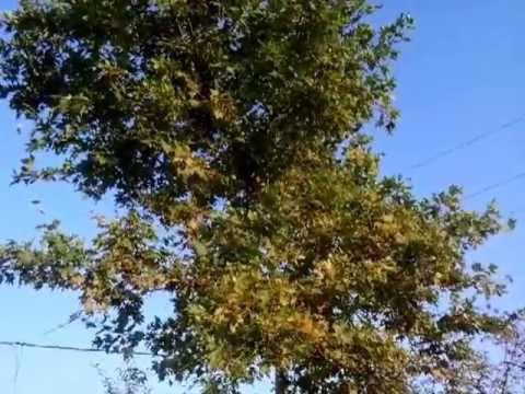 Cicale in campagna