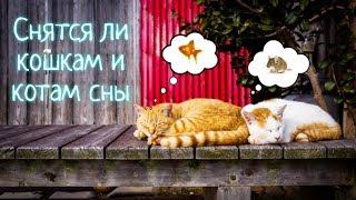 Снятся ли кошкам и котам сны? Увлекательное исследование.