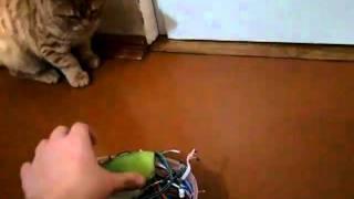 Кот и цитрусы