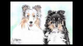2 Dogs (Shelties) - realistic Speedrawing/Timelapse | Salina