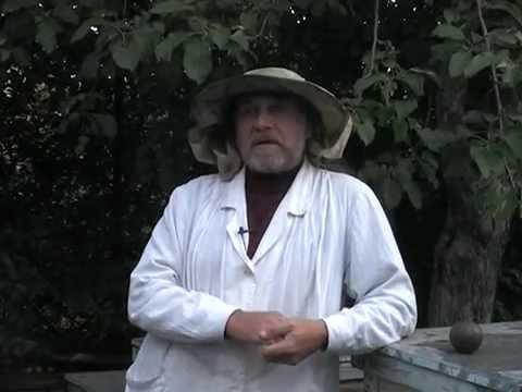 Пчелиный подмор Настойка и мазь как приготовить и использовать