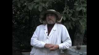 Пчелиный подмор.  Настойка и мазь, как приготовить и использовать .