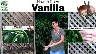 How to Grow Vanilla Vines in 3 Years