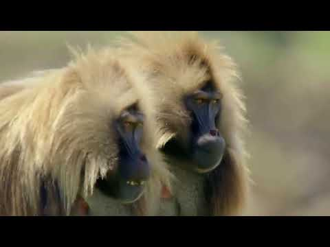 EXTREME AFRICA   3of6    The Simien Mountains   HD 1080p