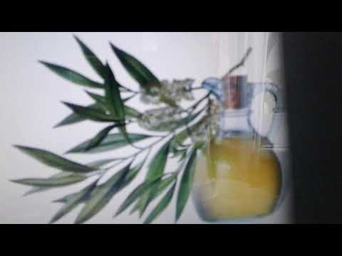 Масло чайного дерева:полезные свойства и применение.