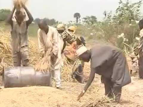 Farming in Kura LG