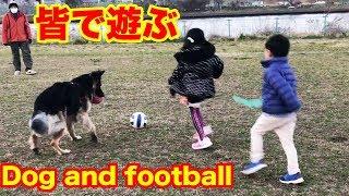 大型犬は楽しく遊べますね、孫達の遊びもエンドレスでお付き合いですね...