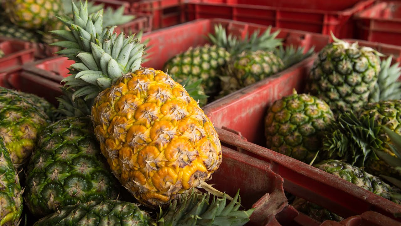 Image result for pineapples africa