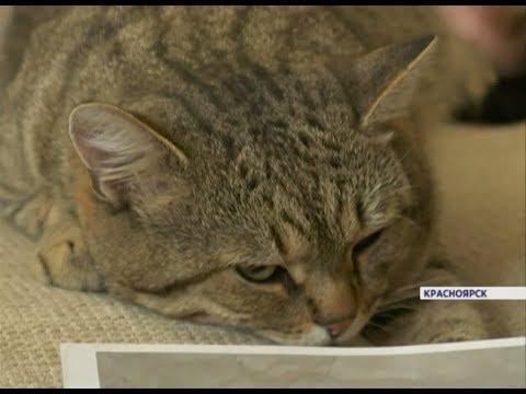 Вопрос: Годовалый кот не приходит трое суток домой, что делать Вернется ли?