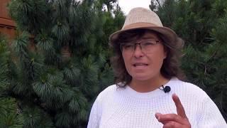 видео Преимущества обрезки деревьев на придомовом участке