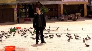 ネパール・ボダナート内で鳩の大群で遊ぶアホ中国人です。チベット仏教...