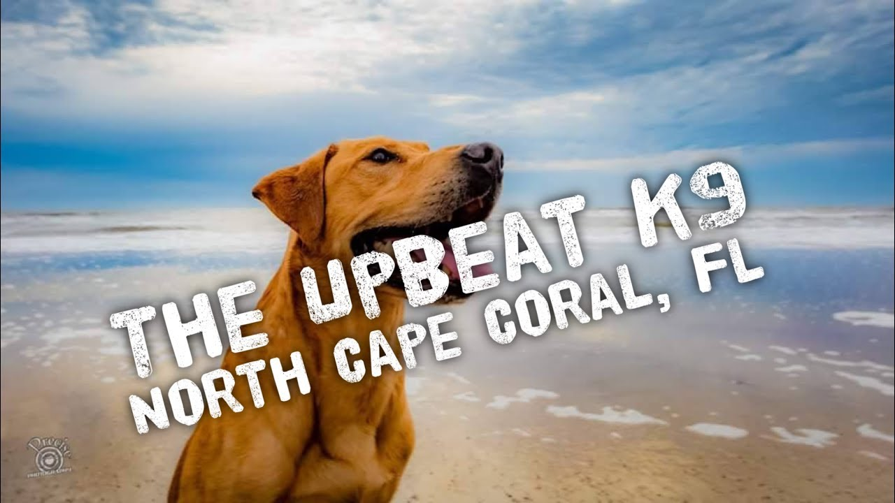 Image Result For Dog Training Cape Coral Fl