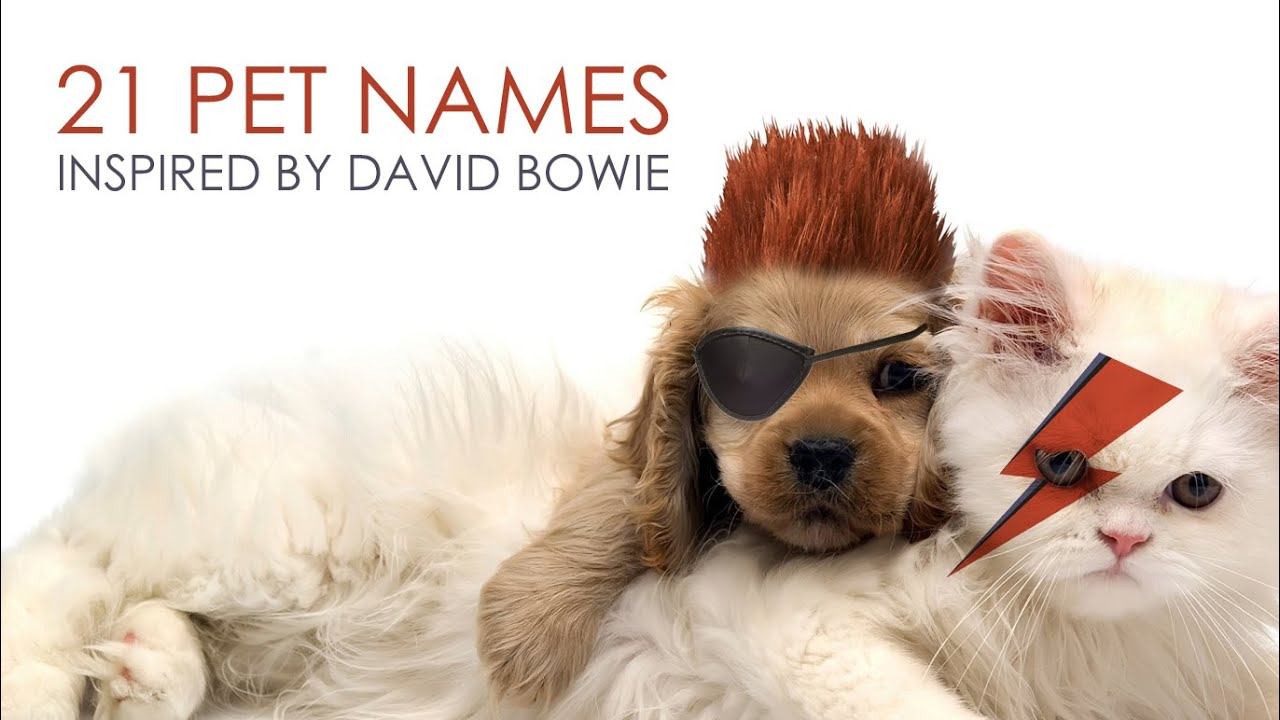DAVID BOWIE | Pet's Names Inspired By
