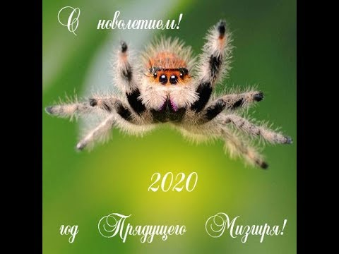 Поздравляю с Новолетием!