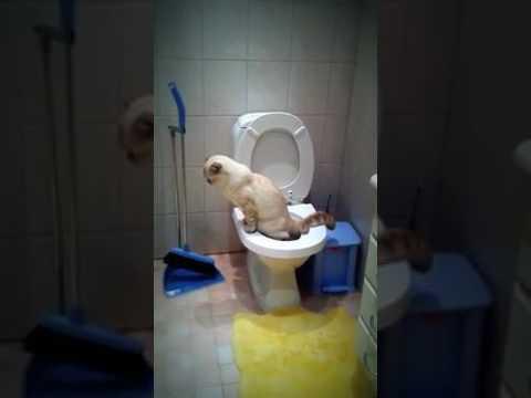 Cute kitten flush the toilet