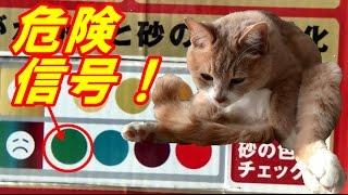 砂の色の変化で猫の病気が分かる猫砂 Lavitoile(ラヴィトワレ)! 昨夜...
