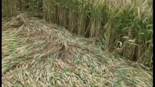 Crop Circles: The Hidden Truth - Part 1