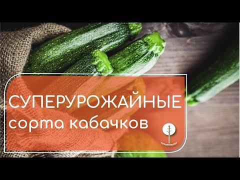 Сажаем высокоурожайные сорта кабачков (цукини): Пупсик, Аспирант, Матрос, Золотинка и Оникс.