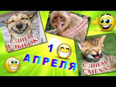 1 апреля -праздник смеха Веселое поздравление с Днём смеха 1 апреля - Видео приколы ржачные до слез