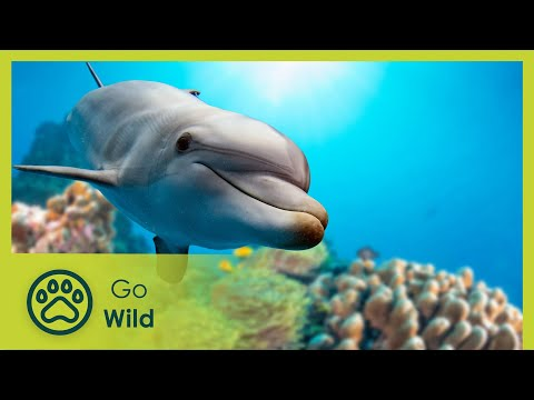 Miracles from the Wildside - The Secrets of Nature