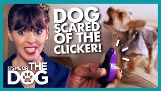 Clicker Training Backfires as Dog Becomes SCARED of the Sound! |  It's Me or The Dog