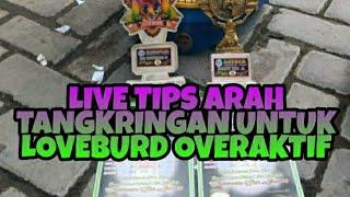 [LIVE]-TIPS ARAH TANGKRINGAN UNTUK LOVEBIRD YANG OVERAKTIF