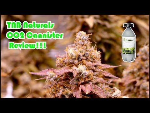 tnb-naturals-co2-enhancer-product-review-&-tutorial:-og-kush-scrog-grow