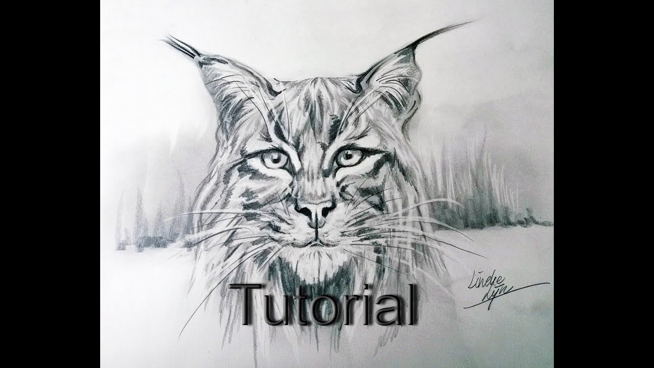 How To Draw A Lynx Animal Drawings 37 Youtube