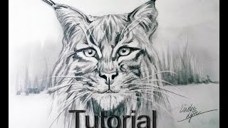 How to draw a Lynx animal drawings / #37
