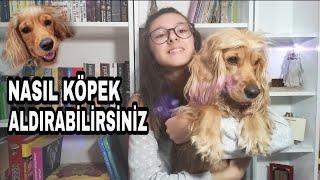 AİLENİZE NASIL KÖPEK ALDIRABILIRSİNİZ |Köpeklerin Sorumluluğu