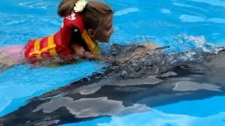 Коктебель дельфинарий плавание с дельфинами