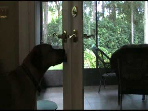 Teach Your Dog Ring Bell Positive Dog Training Obedience In Boone Nc Youtube