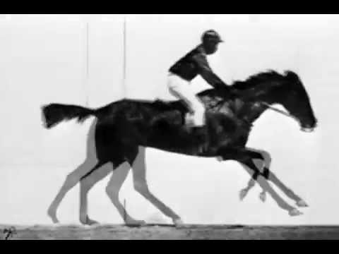 Eadweard Muybridge « El caballo en movimiento »  ( 1887 )