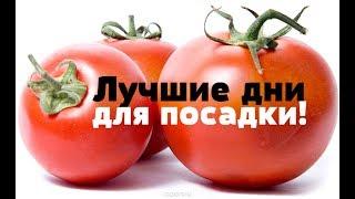 Благоприятные дни для посадки помидор на рассаду в 2019 году! Когда сажать томаты на рассаду?