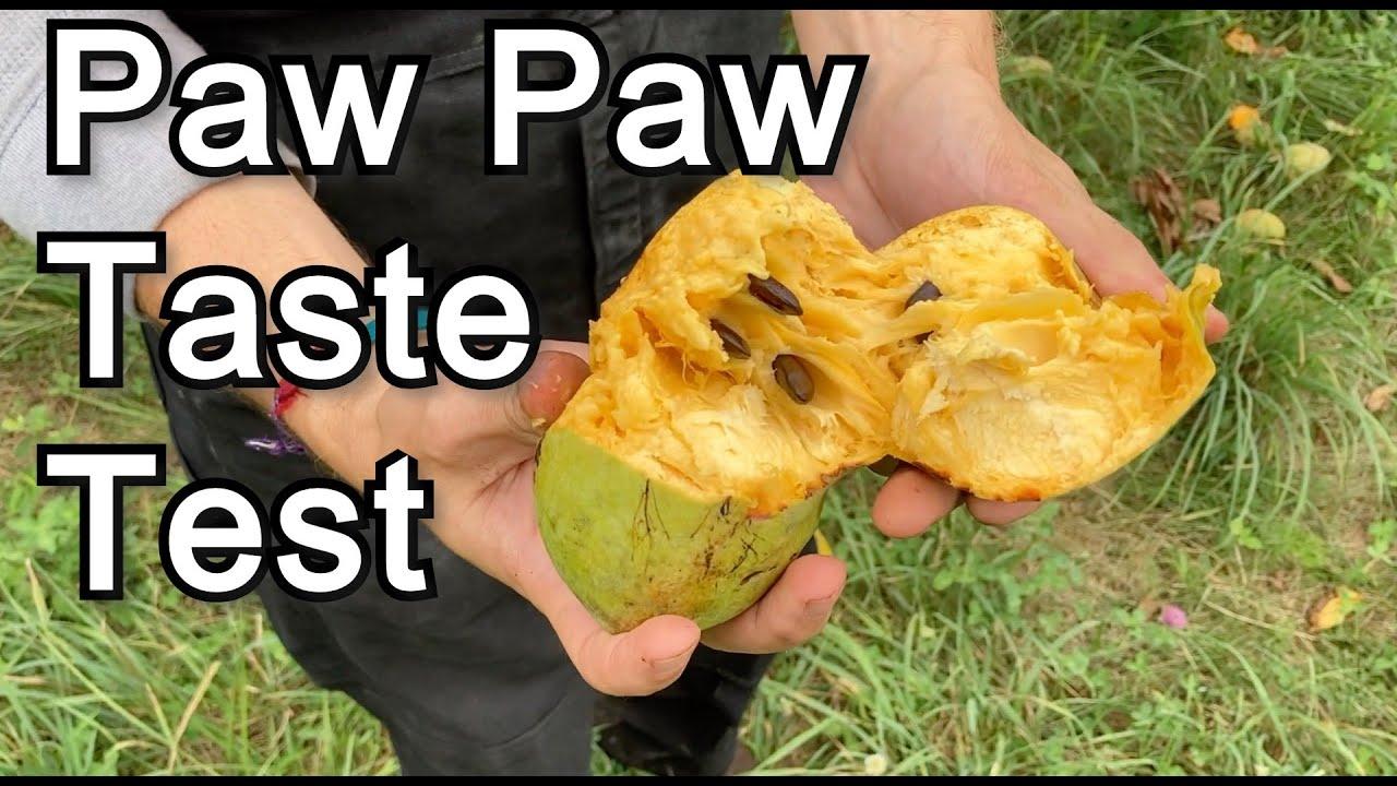 Download Paw Paw Taste Test (Susquehanna, Sunflower, Mango, Prolific, NC1, 1035)