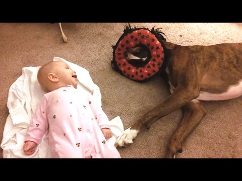 'Boxers Playing With Babies Compilation' || CFS