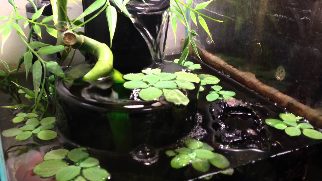 African Dwarf Frog Tank Setup Infinity Fountain Filter