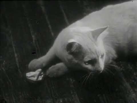 a vida privada de uma gata